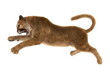 3D Rendering Big Cat Puma on White Stock Images