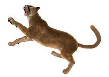 3D Rendering Big Cat Puma on White Stock Photo