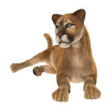 3D Rendering Big Cat Puma on White. 3D rendering of a big cat puma isolated on white background Royalty Free Stock Image