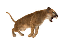 3D Rendering Big Cat Puma on White. 3D rendering of a big cat puma isolated on white background Royalty Free Stock Photo