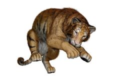 3D Rendering Big Cat Tiger on White. 3D rendering of a big cat tiger isolated on white background Royalty Free Stock Photography