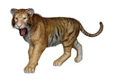 3D Rendering Big Cat Tiger on White Stock Image