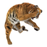 3D Rendering Big Cat Tiger on White Royalty Free Stock Images