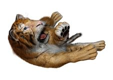 3D Rendering Big Cat Tiger on White. 3D rendering of a big cat tiger isolated on white background Stock Photography