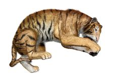 3D rendering big cat tiger on white. 3D rendering of a big cat tiger isolated on white background Royalty Free Stock Image