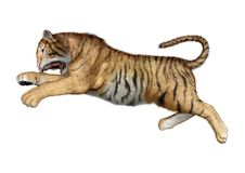 3D Rendering Big Cat Tiger on White. 3D rendering of a big cat tiger isolated on white background Stock Photos