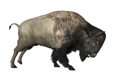 3D Rendering Bison on White Stock Image