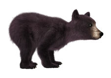 3D Rendering  Black Bear Cub on White. 3D rendering of a black bear cub  on white background Royalty Free Stock Photos