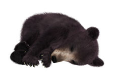 3D Rendering  Black Bear Cub on White. 3D rendering of a black bear cub isolated on white background Royalty Free Stock Image