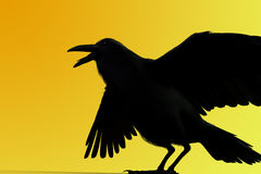 3D rendering of a black raven. On yellow background Royalty Free Stock Photo
