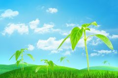 3d rendering of bright green grass and several young sprouts growing under blue sky and light clouds. royalty free illustration