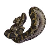 3D Rendering Burmese Python on White royalty free stock photography