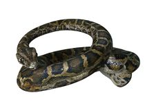 3D Rendering Burmese Python on White stock illustration