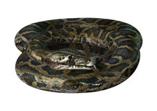 3D Rendering Burmese Python on White stock photo