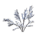 3D Rendering Bush Under Snow on White. 3D rendering of a bush under snow isolated on white background Stock Photos