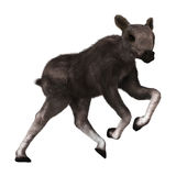 3D Rendering Caribou Calf on White. 3D rendering of a caribou calf isolated on white background Royalty Free Stock Photo