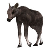3D Rendering Caribou Calf on White. 3D rendering of a caribou calf isolated on white background Stock Images