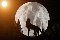 3D rendering from a caterwauling wolf before a big moon with lens flares. A 3D rendering from a caterwauling wolf before a big moon with lens flares Royalty Free Stock Image