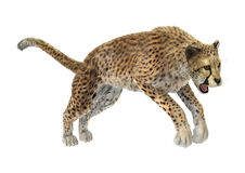 3D Rendering Cheetah on White Stock Photos