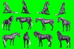 Collection of arabian horse poses. 3D rendering of a collection on chroma key background of arabian horse poses Stock Photo