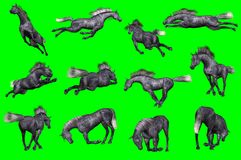 Collection of arabian horse poses. 3D rendering of a collection on chroma key background of arabian horse poses Stock Image