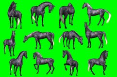Collection of arabian horse poses. 3D rendering of a collection on chroma key background of arabian horse poses Royalty Free Stock Image