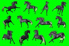 Collection of arabian horse poses. 3D rendering of a collection on chroma key background of arabian horse poses Royalty Free Stock Images