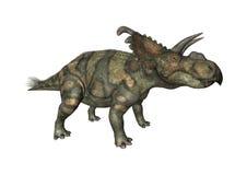 3D Rendering Dinosaur Albertaceratops on White Stock Photos
