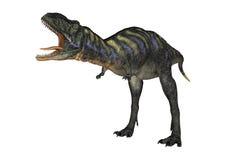 3D Rendering Dinosaur Aucasaurus on White Royalty Free Stock Image