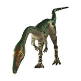 3D Rendering Dinosaur Coelophysis on White Stock Images