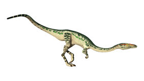 3D Rendering Dinosaur Coelophysis on White Stock Photos