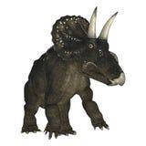 3D Rendering Dinosaur Diceratops on White Stock Image