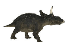 3D Rendering Dinosaur Diceratops on White Royalty Free Stock Photo