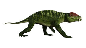 3D Rendering Dinosaur Doliosauriscus on White Stock Image