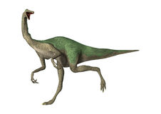 3D Rendering Dinosaur Gallimimus on White Stock Photo