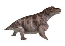 3D Rendering Dinosaur Keratocephalus on White Royalty Free Stock Photo