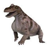 3D Rendering Dinosaur Keratocephalus on White Royalty Free Stock Photos