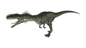 3D Rendering Dinosaur Monolophosaurus on White Royalty Free Stock Photo