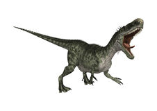 3D Rendering Dinosaur Monolophosaurus on White Royalty Free Stock Photography