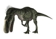 3D Rendering Dinosaur Monolophosaurus on White Royalty Free Stock Images