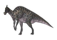 3D Rendering Dinosaur Saurolophus on White Royalty Free Stock Photography