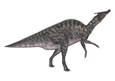 3D Rendering Dinosaur Saurolophus on White Stock Photography
