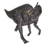 3D Rendering Dinosaur Saurolophus on White Royalty Free Stock Images