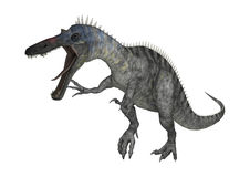 3D Rendering Dinosaur Suchomimus on White Royalty Free Stock Images