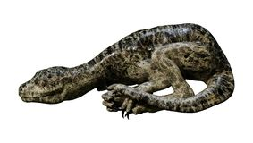 3D Rendering Dinosaur Tyrannosaurus Hatchling on White. 3D rendering of a dinosaur Tyrannosaurus hatchling isolated on white background Stock Photography