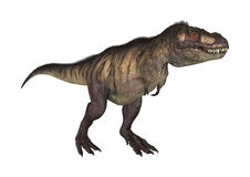 3D Rendering Dinosaur Tyrannosaurus on White Royalty Free Stock Images