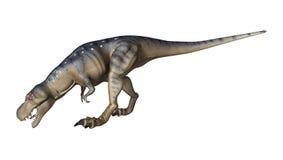 3D Rendering Dinosaur Tyrannosaurus on White Royalty Free Stock Image