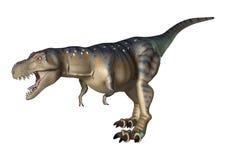 3D Rendering Dinosaur Tyrannosaurus on White Stock Photography