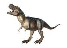 3D Rendering Dinosaur Tyrannosaurus on White. 3D rendering of a dinosaur Tyrannosaurus  on white background Royalty Free Stock Photos