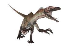3D Rendering Dinosaur Utahraptor on White Stock Photos